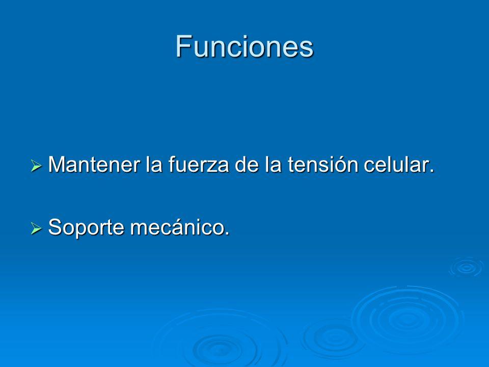 Funciones Mantener la fuerza de la tensión celular. Soporte mecánico.