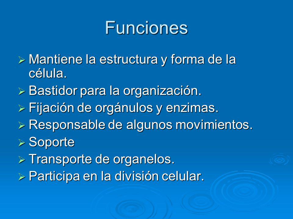 Funciones Mantiene la estructura y forma de la célula.