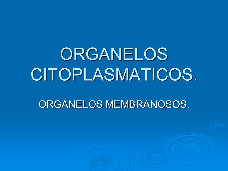 ORGANELOS CITOPLASMATICOS.
