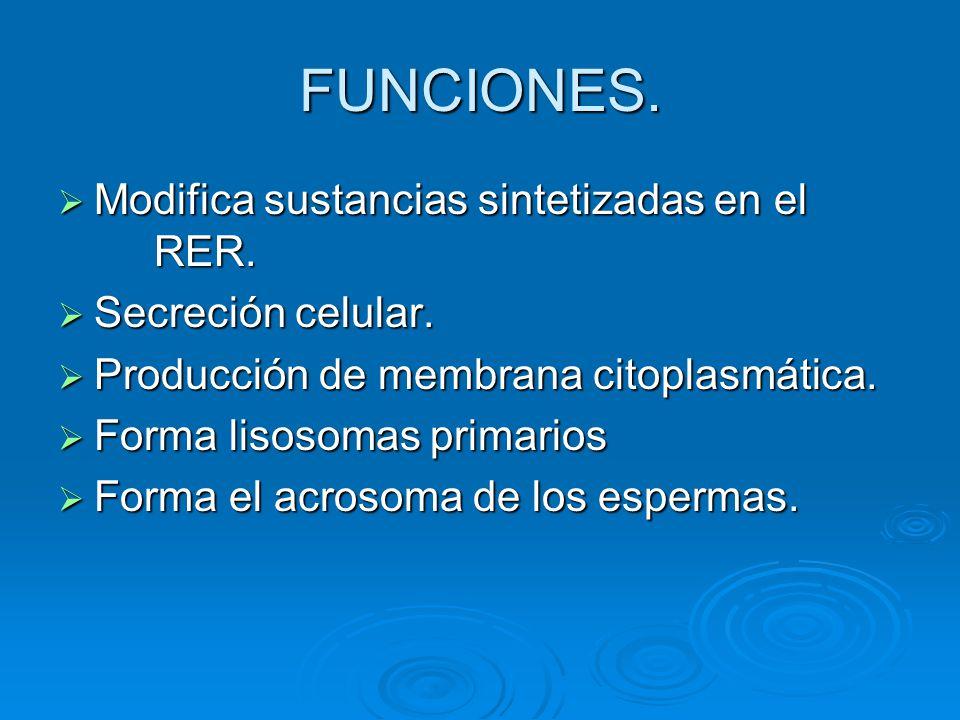 FUNCIONES. Modifica sustancias sintetizadas en el RER.