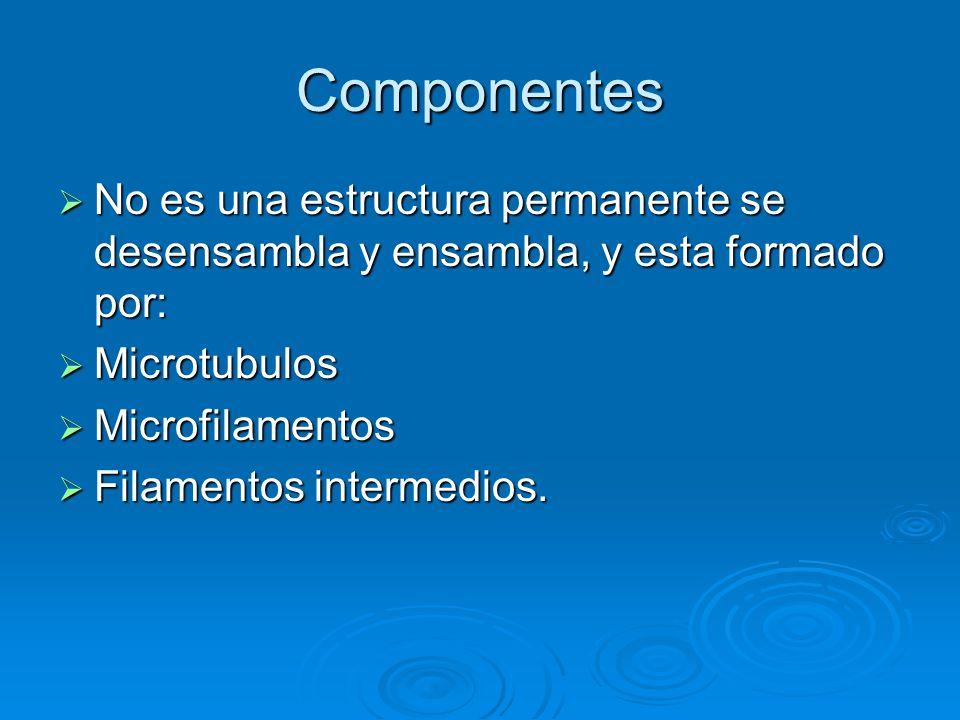 Componentes No es una estructura permanente se desensambla y ensambla, y esta formado por: Microtubulos.