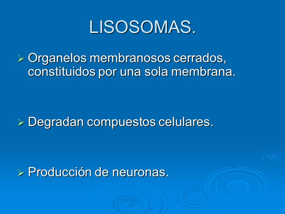 LISOSOMAS. Organelos membranosos cerrados, constituidos por una sola membrana. Degradan compuestos celulares.