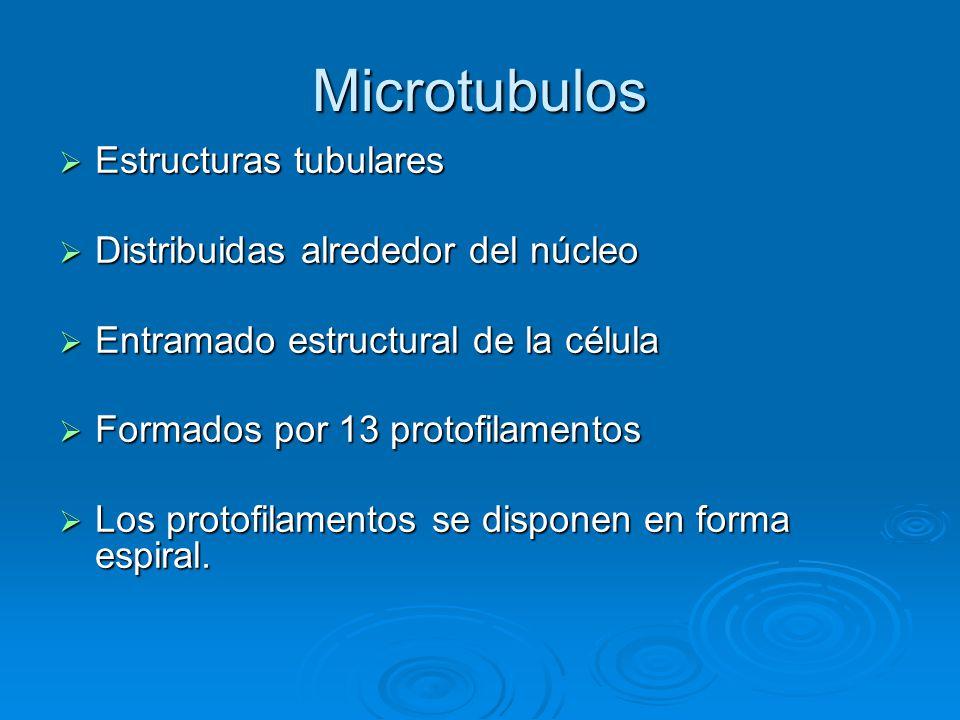 Microtubulos Estructuras tubulares Distribuidas alrededor del núcleo