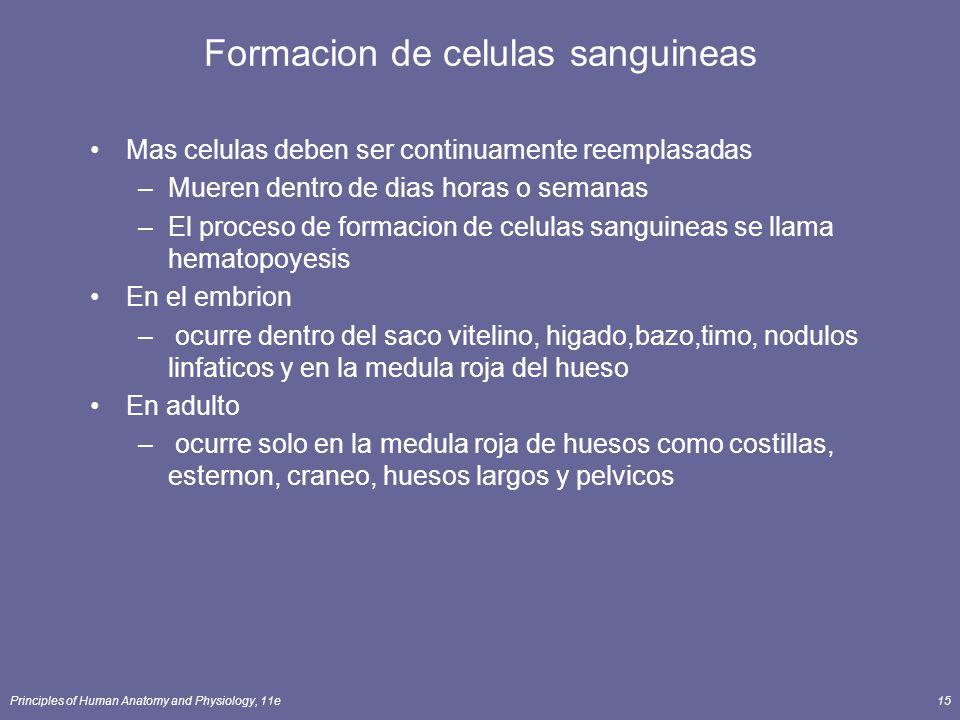 Formacion de celulas sanguineas