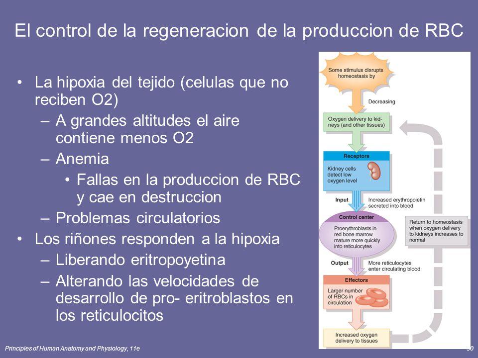 El control de la regeneracion de la produccion de RBC