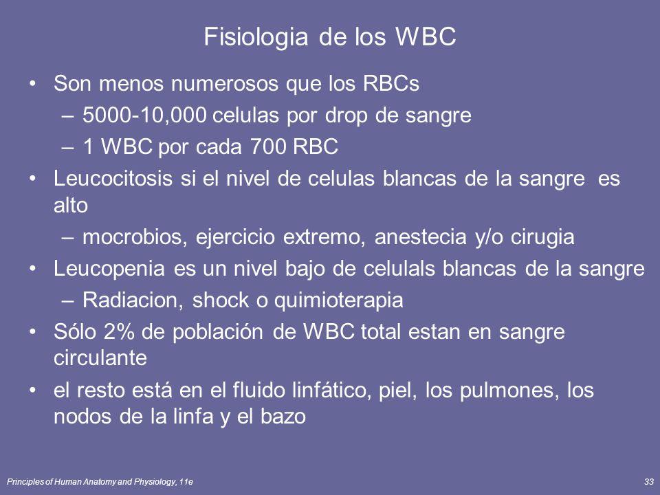 Fisiologia de los WBC Son menos numerosos que los RBCs