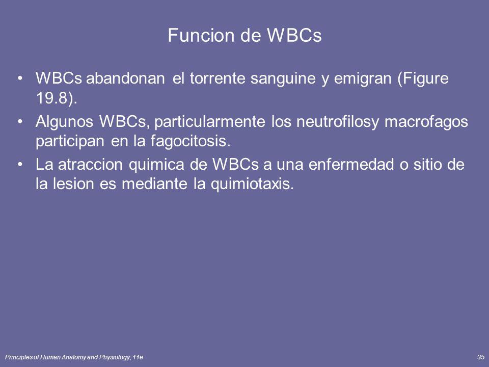 Funcion de WBCs WBCs abandonan el torrente sanguine y emigran (Figure 19.8).