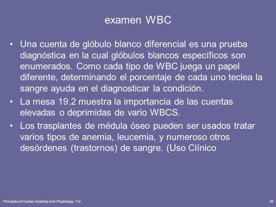 examen WBC