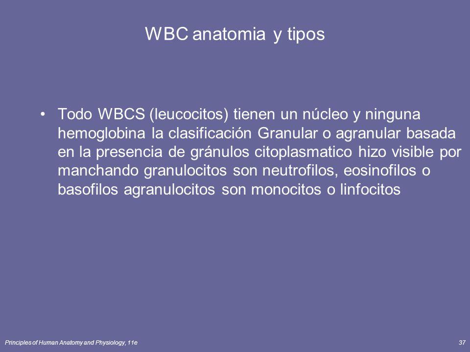 WBC anatomia y tipos