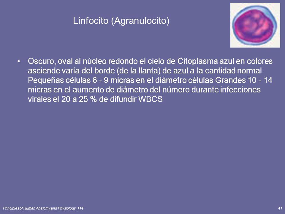 Linfocito (Agranulocito)