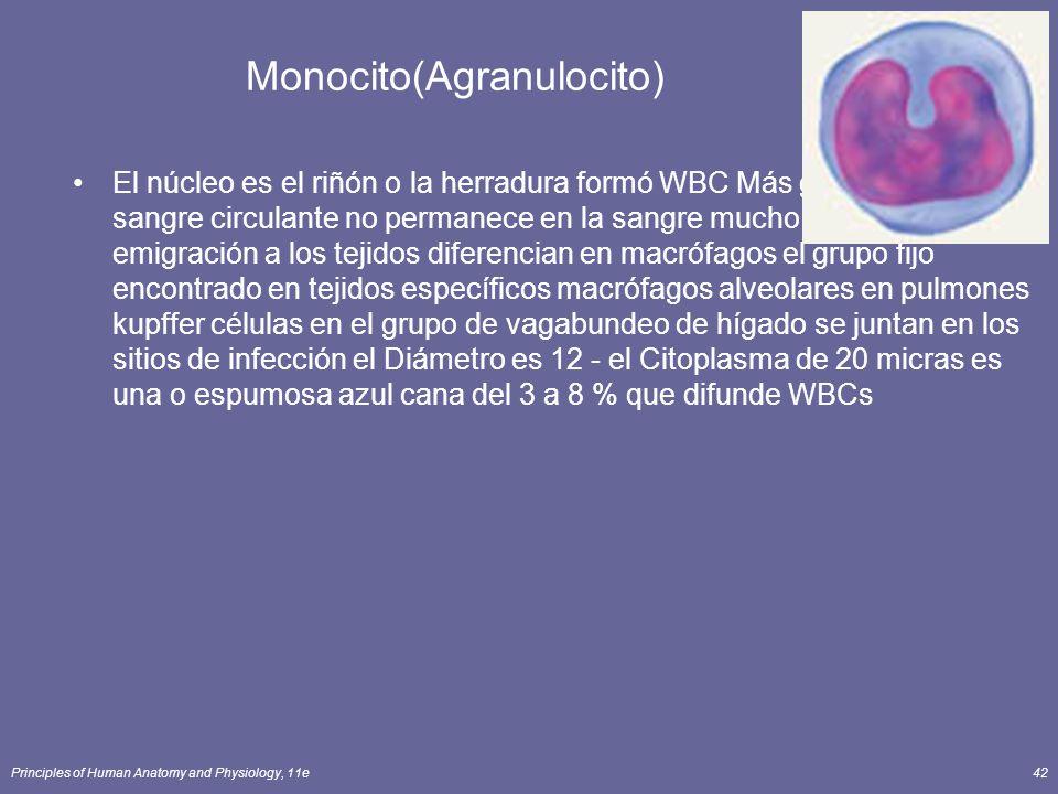 Monocito(Agranulocito)