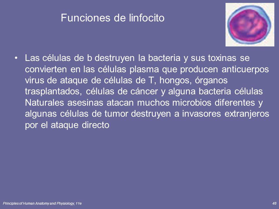 Funciones de linfocito