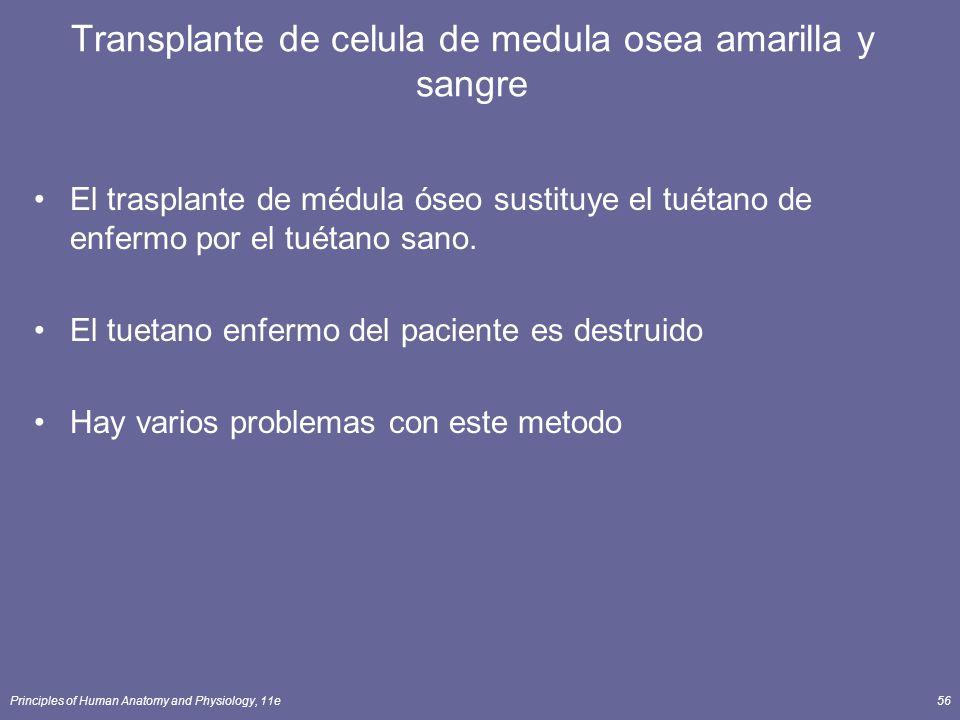 Transplante de celula de medula osea amarilla y sangre