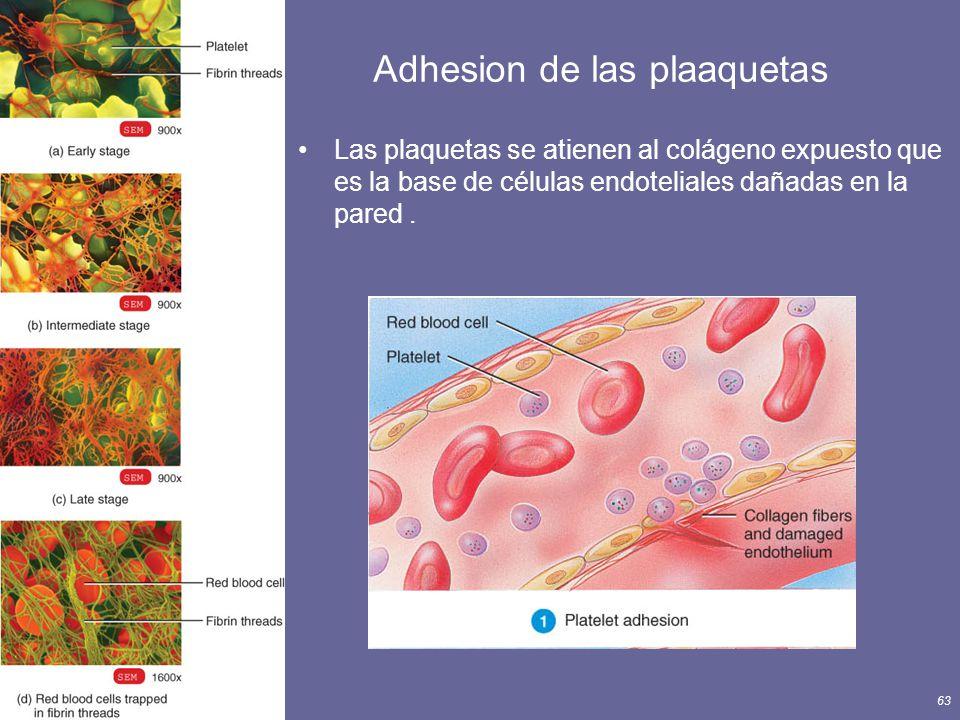 Adhesion de las plaaquetas