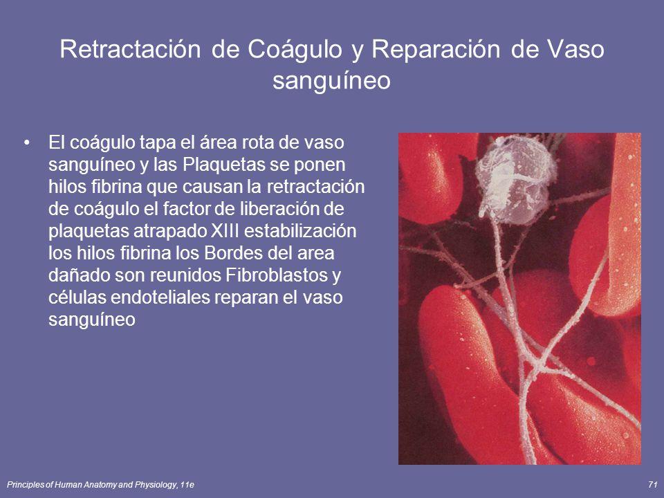 Retractación de Coágulo y Reparación de Vaso sanguíneo