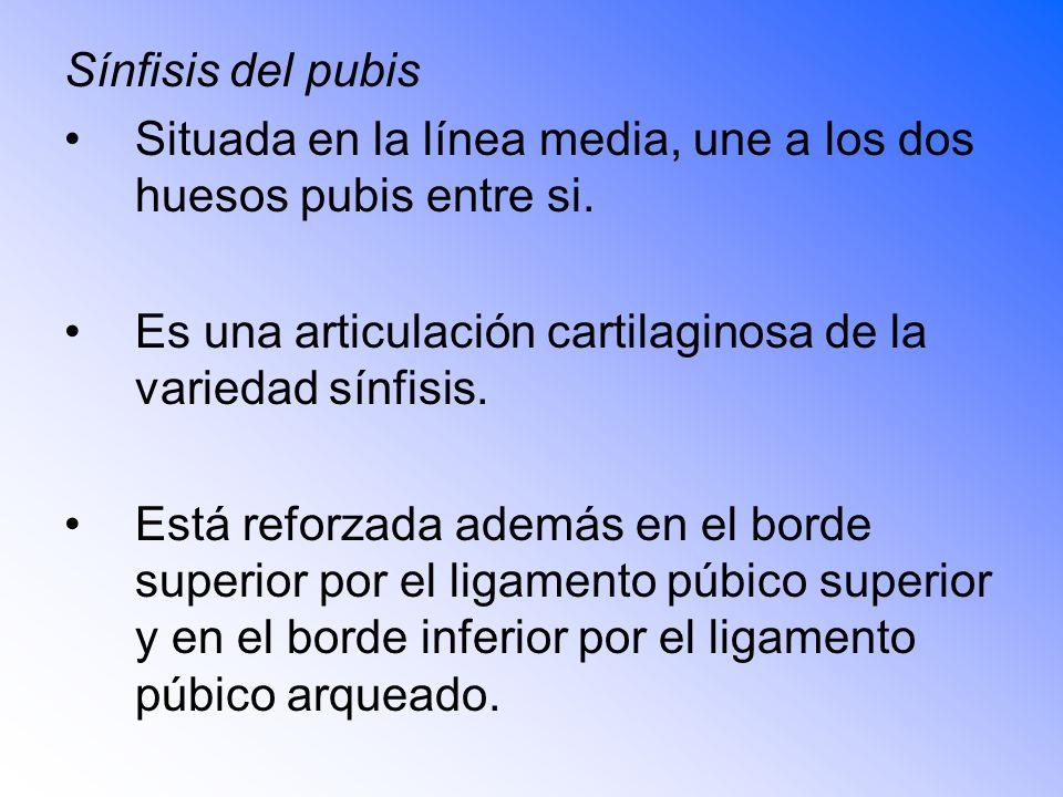 Sínfisis del pubis Situada en la línea media, une a los dos huesos pubis entre si. Es una articulación cartilaginosa de la variedad sínfisis.