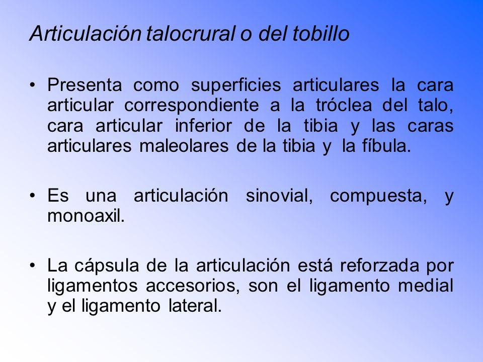 Articulación talocrural o del tobillo