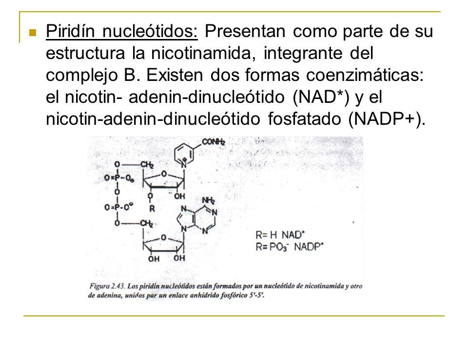 Piridín nucleótidos: Presentan como parte de su estructura la nicotinamida, integrante del complejo B.