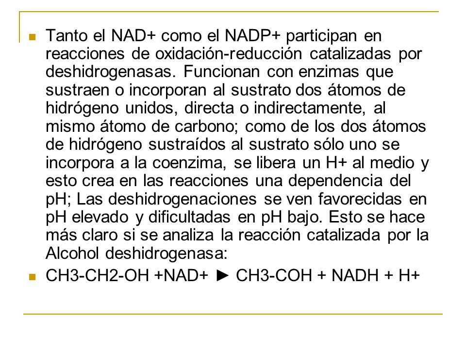 Tanto el NAD+ como el NADP+ participan en reacciones de oxidación-reducción catalizadas por deshidrogenasas. Funcionan con enzimas que sustraen o incorporan al sustrato dos átomos de hidrógeno unidos, directa o indirectamente, al mismo átomo de carbono; como de los dos átomos de hidrógeno sustraídos al sustrato sólo uno se incorpora a la coenzima, se libera un H+ al medio y esto crea en las reacciones una dependencia del pH; Las deshidrogenaciones se ven favorecidas en pH elevado y dificultadas en pH bajo. Esto se hace más claro si se analiza la reacción catalizada por la Alcohol deshidrogenasa:
