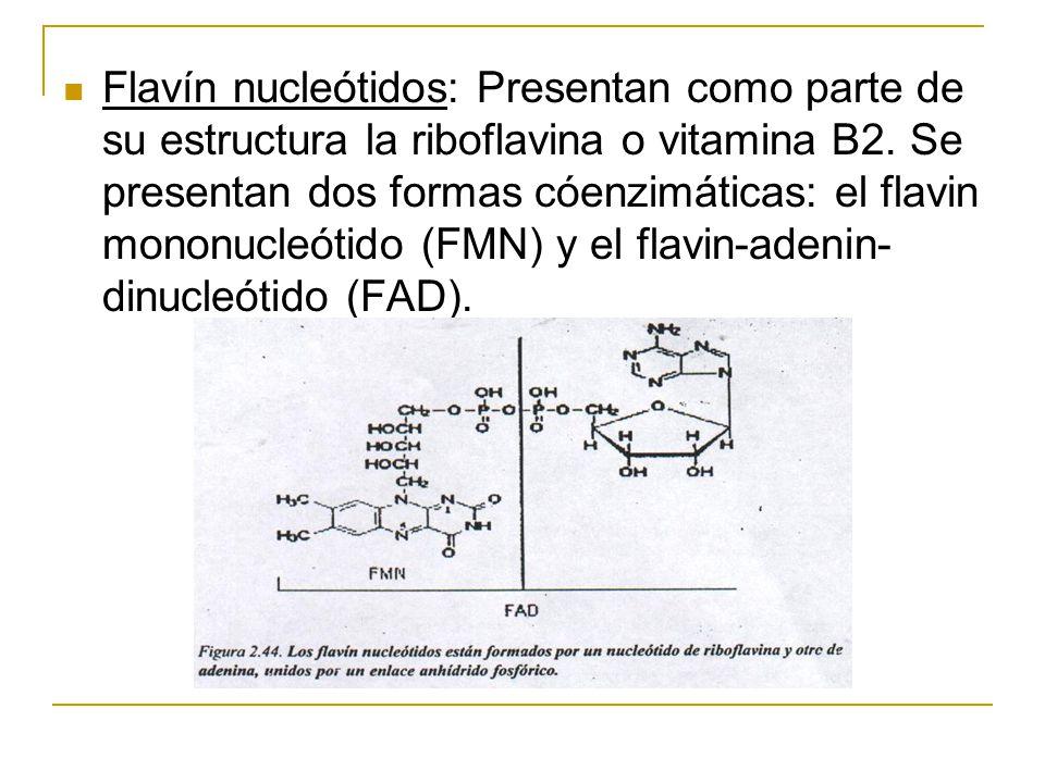 Flavín nucleótidos: Presentan como parte de su estructura la riboflavina o vitamina B2.