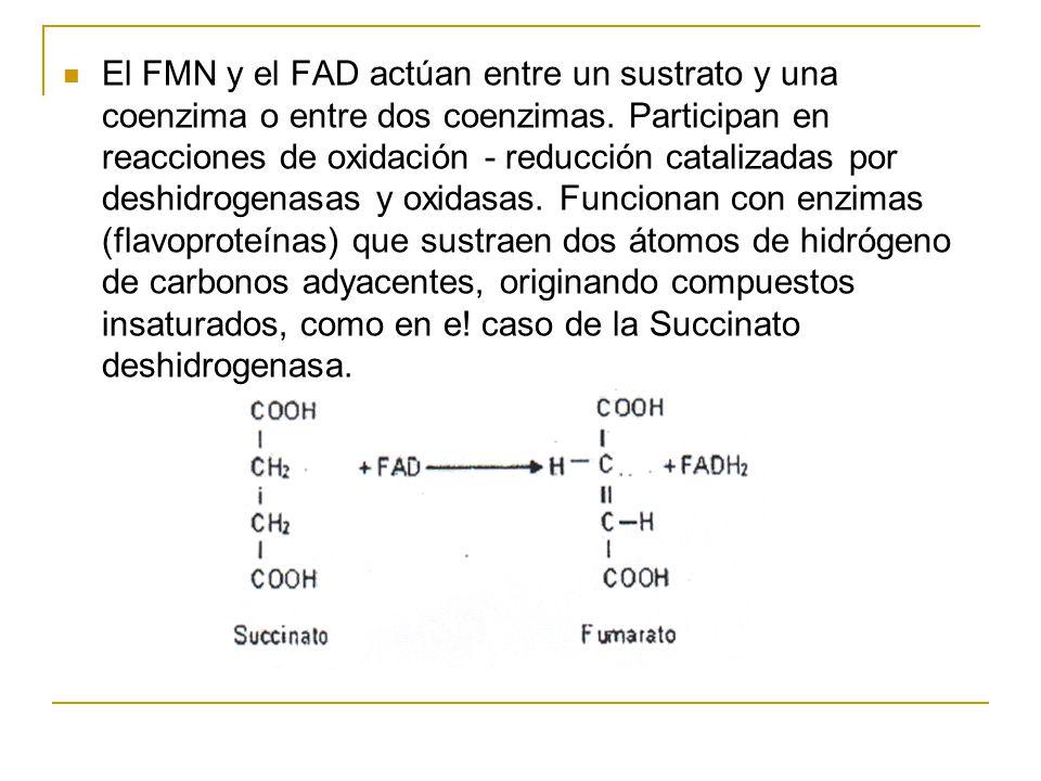 El FMN y el FAD actúan entre un sustrato y una coenzima o entre dos coenzimas.