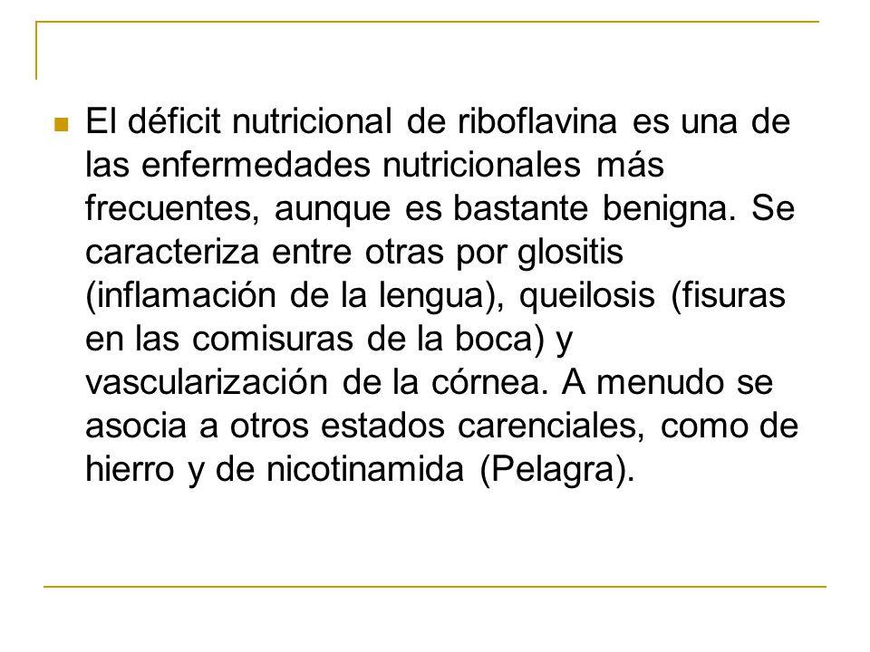 El déficit nutricional de riboflavina es una de las enfermedades nutricionales más frecuentes, aunque es bastante benigna.