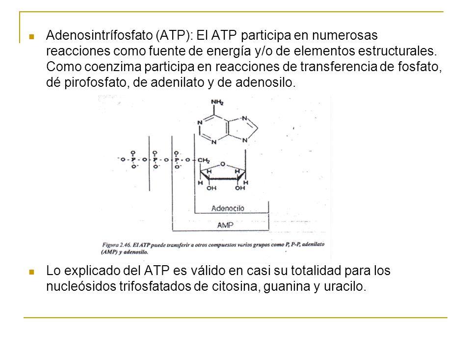 Adenosintrífosfato (ATP): El ATP participa en numerosas reacciones como fuente de energía y/o de elementos estructurales. Como coenzima participa en reacciones de transferencia de fosfato, dé pirofosfato, de adenilato y de adenosilo.