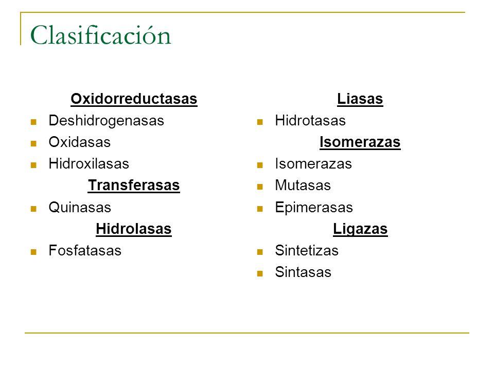 Clasificación Oxidorreductasas Deshidrogenasas Oxidasas Hidroxilasas