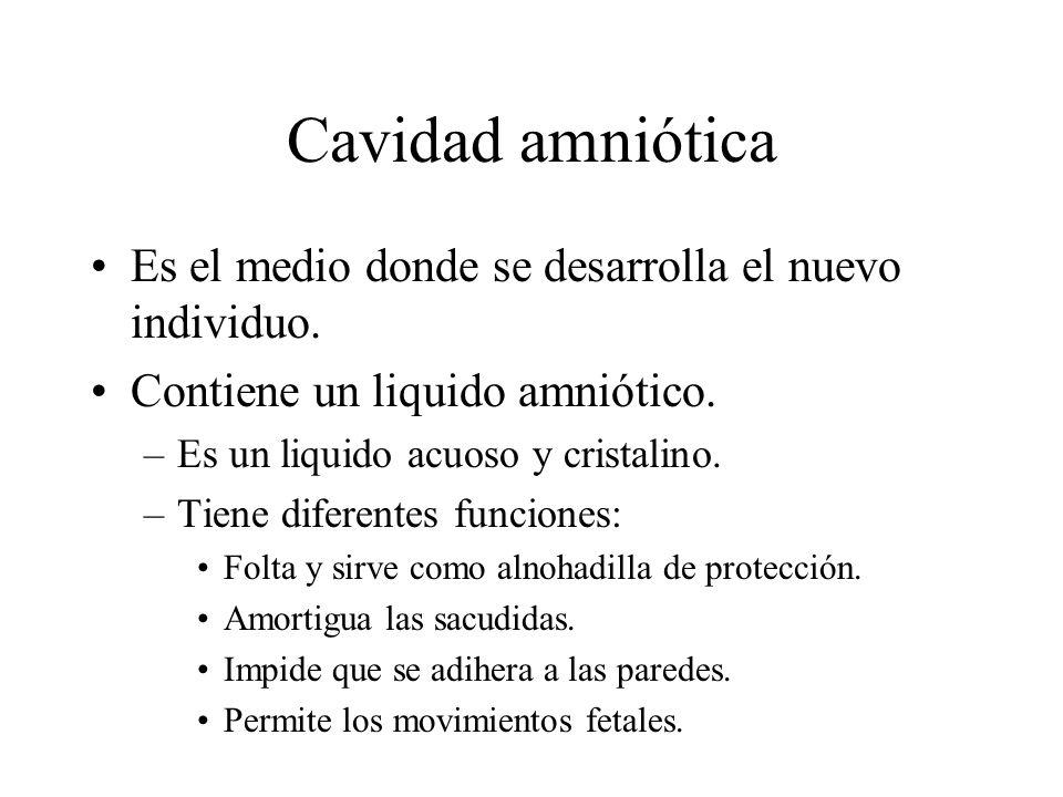 Cavidad amniótica Es el medio donde se desarrolla el nuevo individuo.