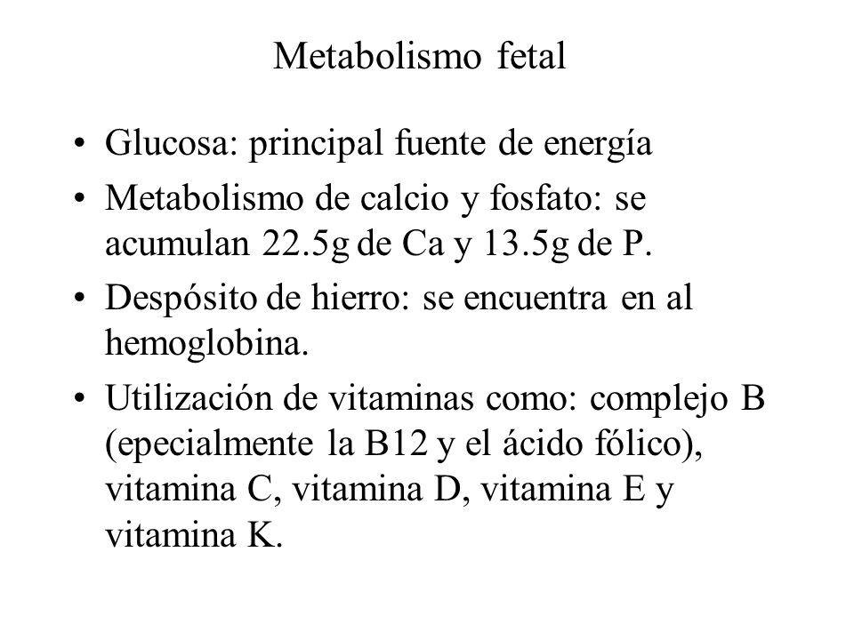 Metabolismo fetal Glucosa: principal fuente de energía