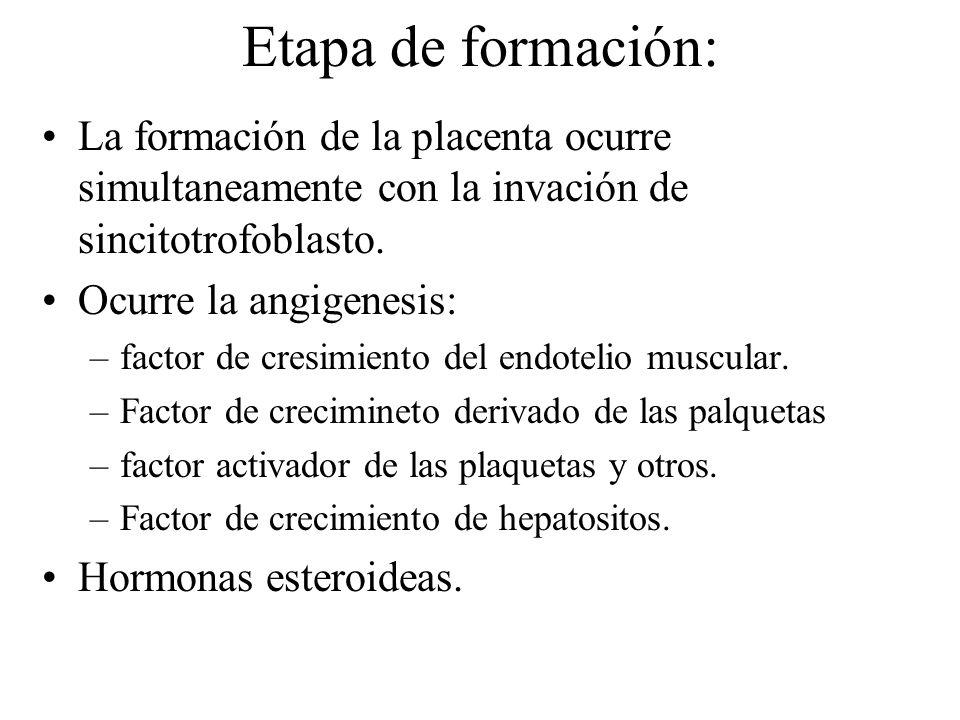 Etapa de formación: La formación de la placenta ocurre simultaneamente con la invación de sincitotrofoblasto.