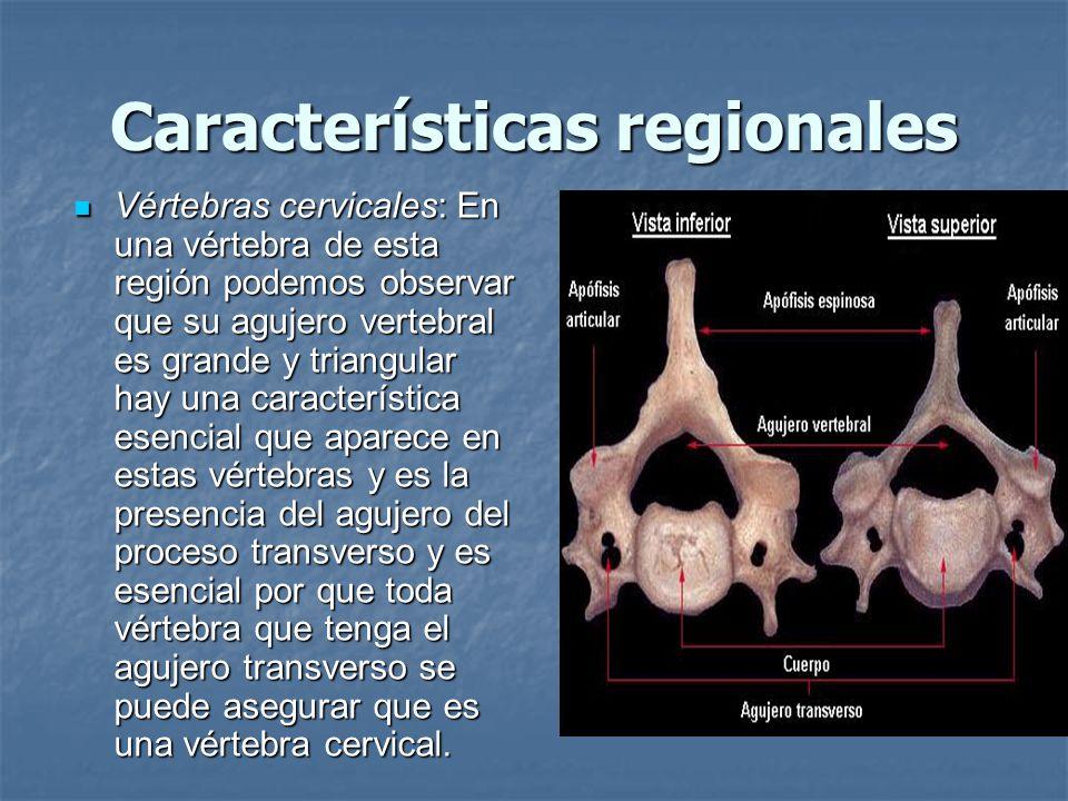 Características regionales