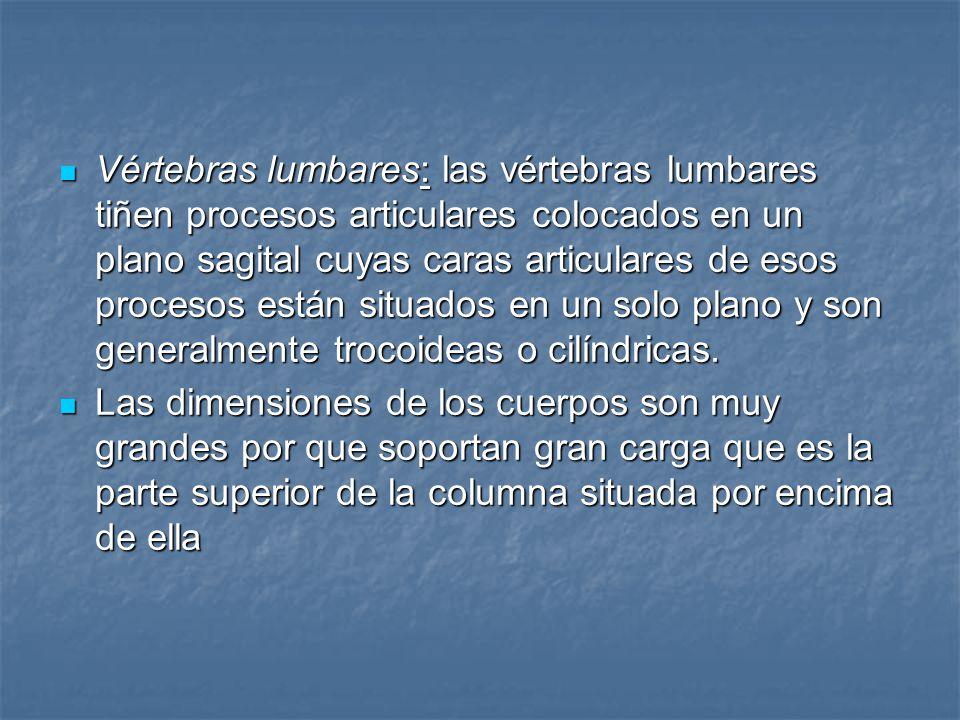 Vértebras lumbares: las vértebras lumbares tiñen procesos articulares colocados en un plano sagital cuyas caras articulares de esos procesos están situados en un solo plano y son generalmente trocoideas o cilíndricas.