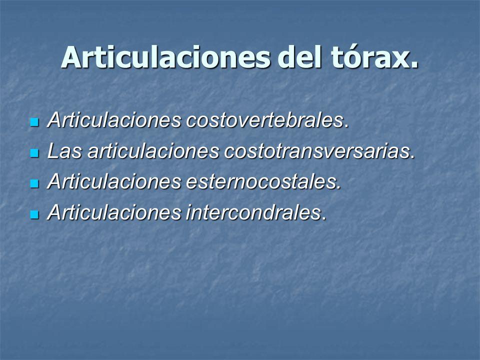Articulaciones del tórax.
