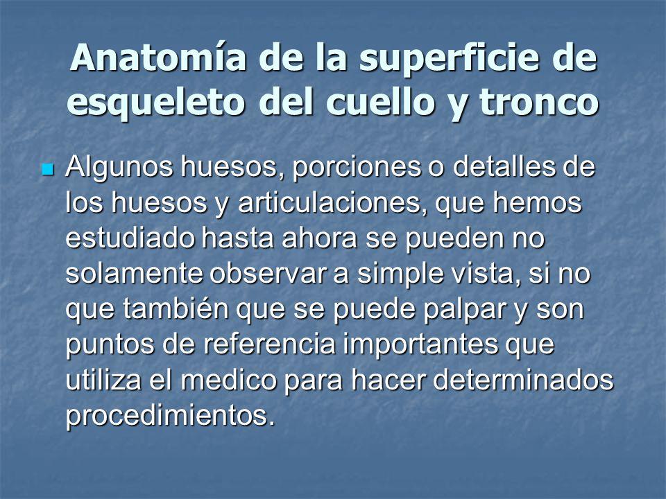 Anatomía de la superficie de esqueleto del cuello y tronco