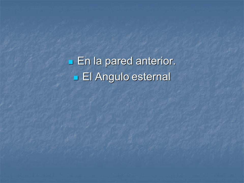 En la pared anterior. El Angulo esternal