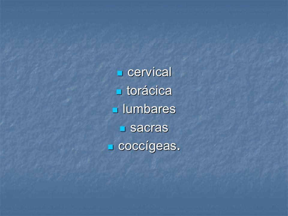 cervical torácica lumbares sacras coccígeas.