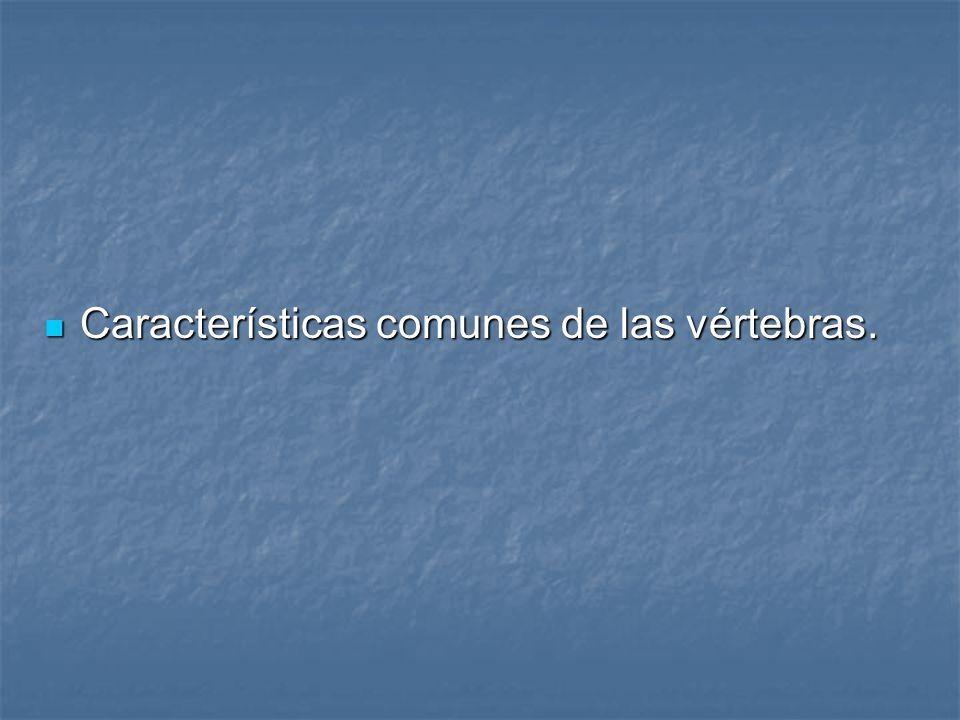 Características comunes de las vértebras.