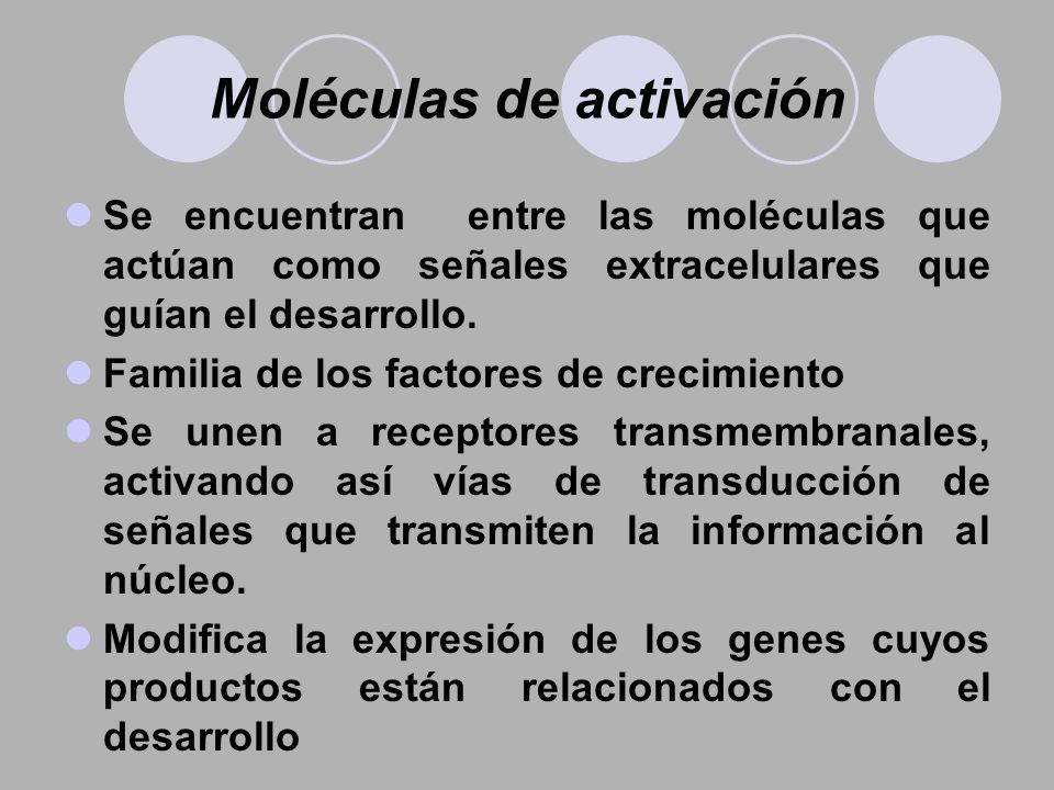Moléculas de activación