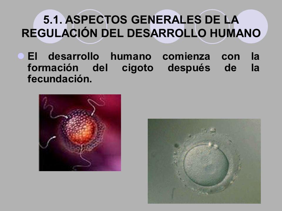 5.1. ASPECTOS GENERALES DE LA REGULACIÓN DEL DESARROLLO HUMANO