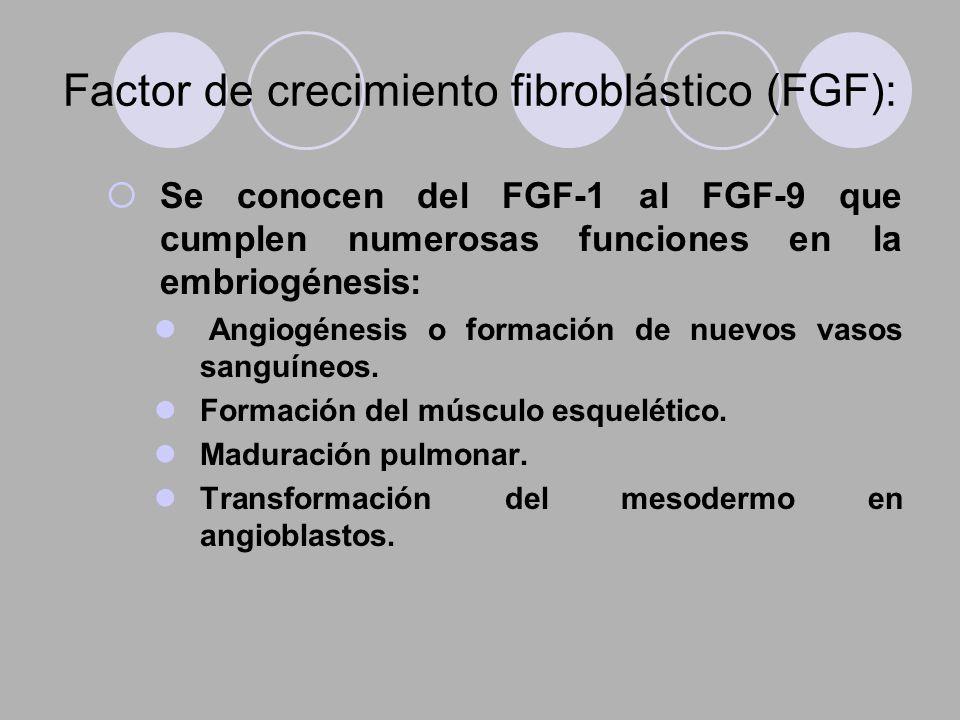 Factor de crecimiento fibroblástico (FGF):