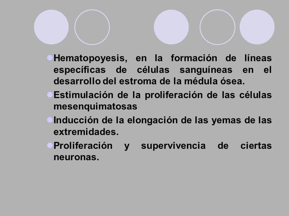 Hematopoyesis, en la formación de líneas específicas de células sanguíneas en el desarrollo del estroma de la médula ósea.