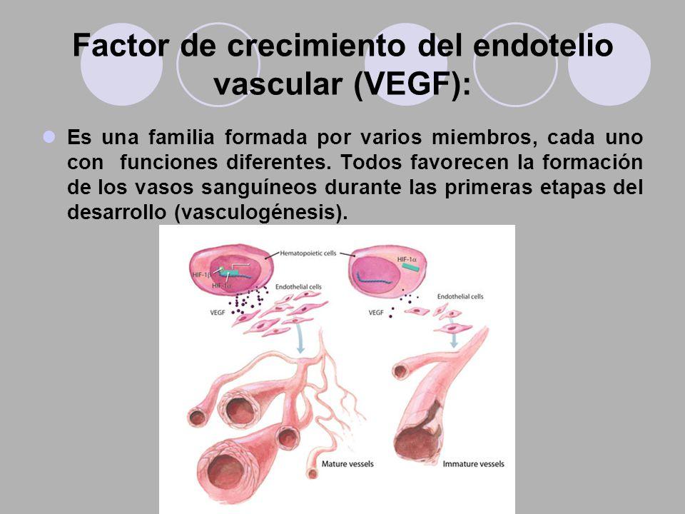 Factor de crecimiento del endotelio vascular (VEGF):