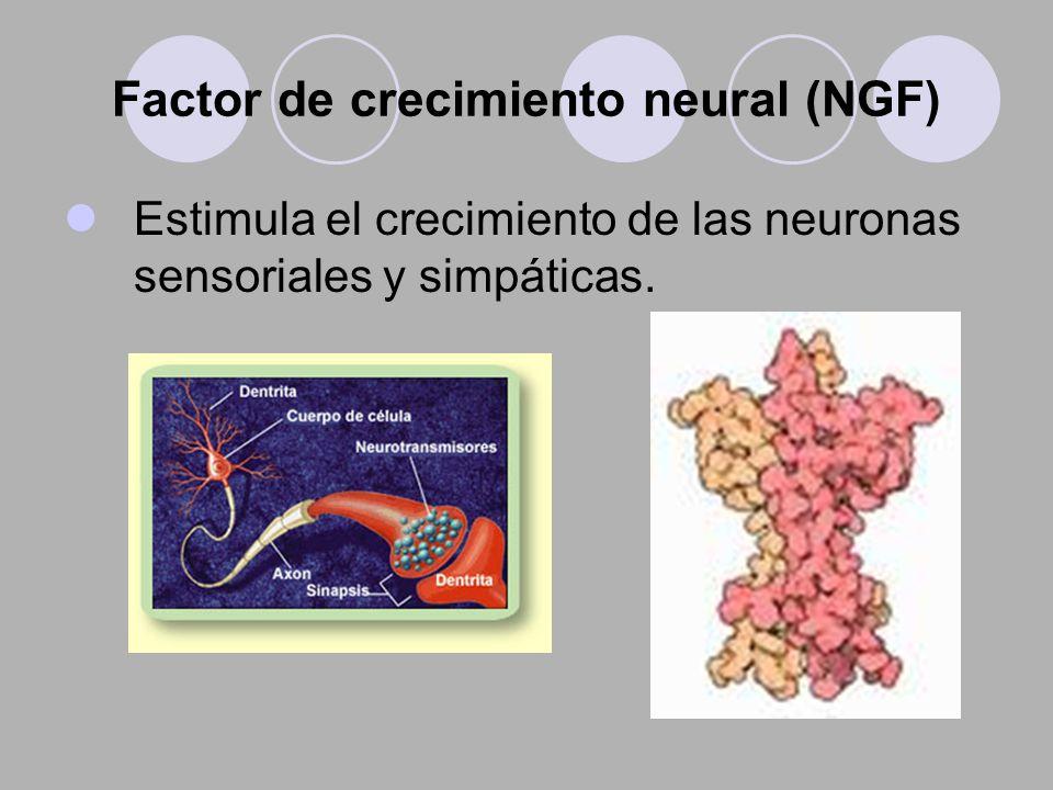 Factor de crecimiento neural (NGF)