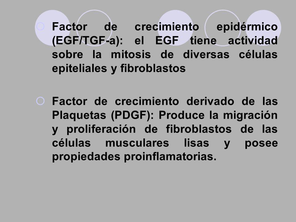 Factor de crecimiento epidérmico (EGF/TGF-a): el EGF tiene actividad sobre la mitosis de diversas células epiteliales y fibroblastos