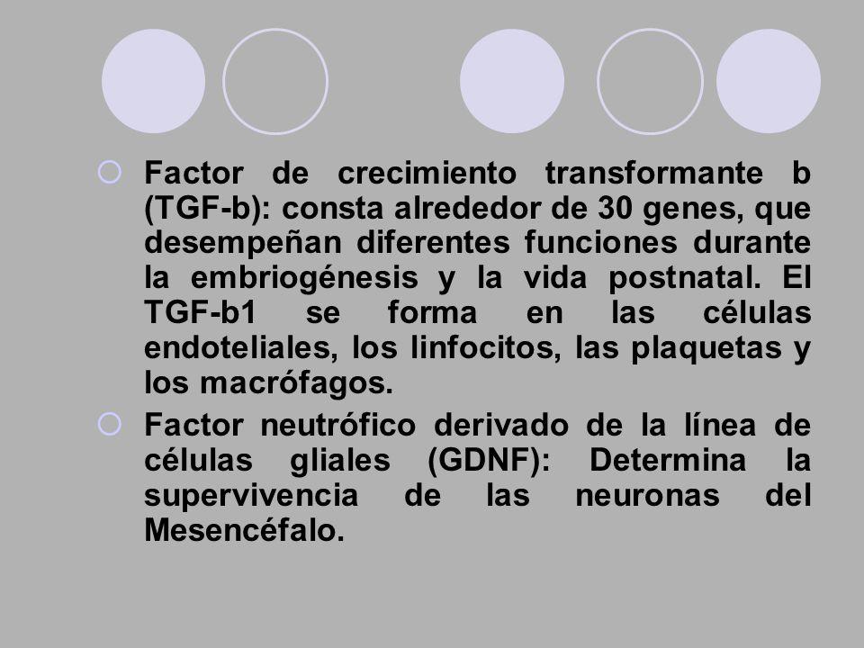 Factor de crecimiento transformante b (TGF-b): consta alrededor de 30 genes, que desempeñan diferentes funciones durante la embriogénesis y la vida postnatal. El TGF-b1 se forma en las células endoteliales, los linfocitos, las plaquetas y los macrófagos.