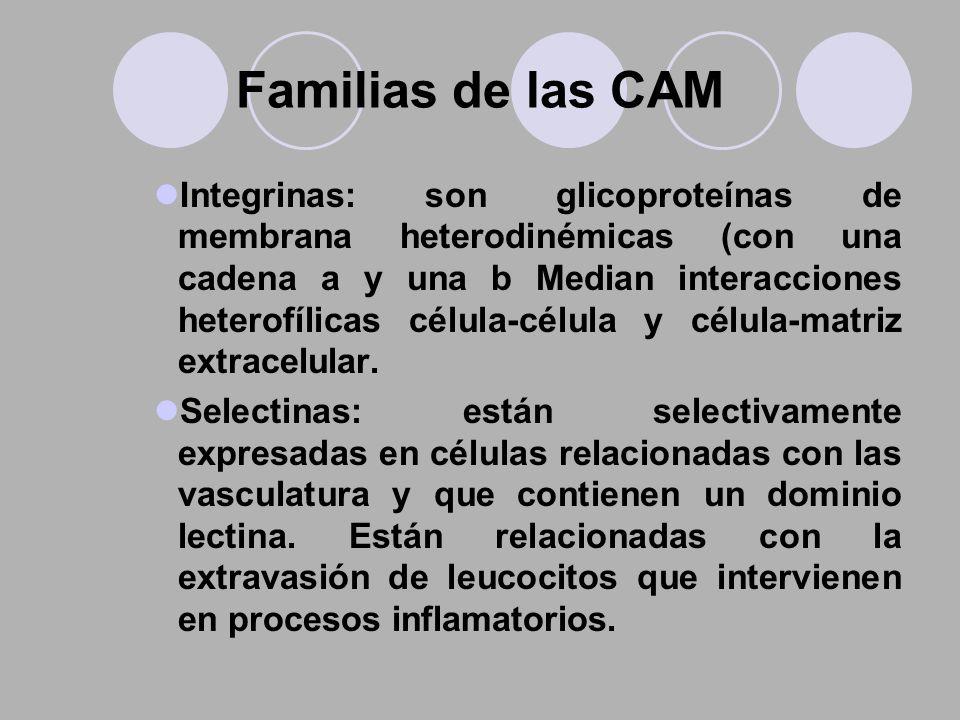 Familias de las CAM