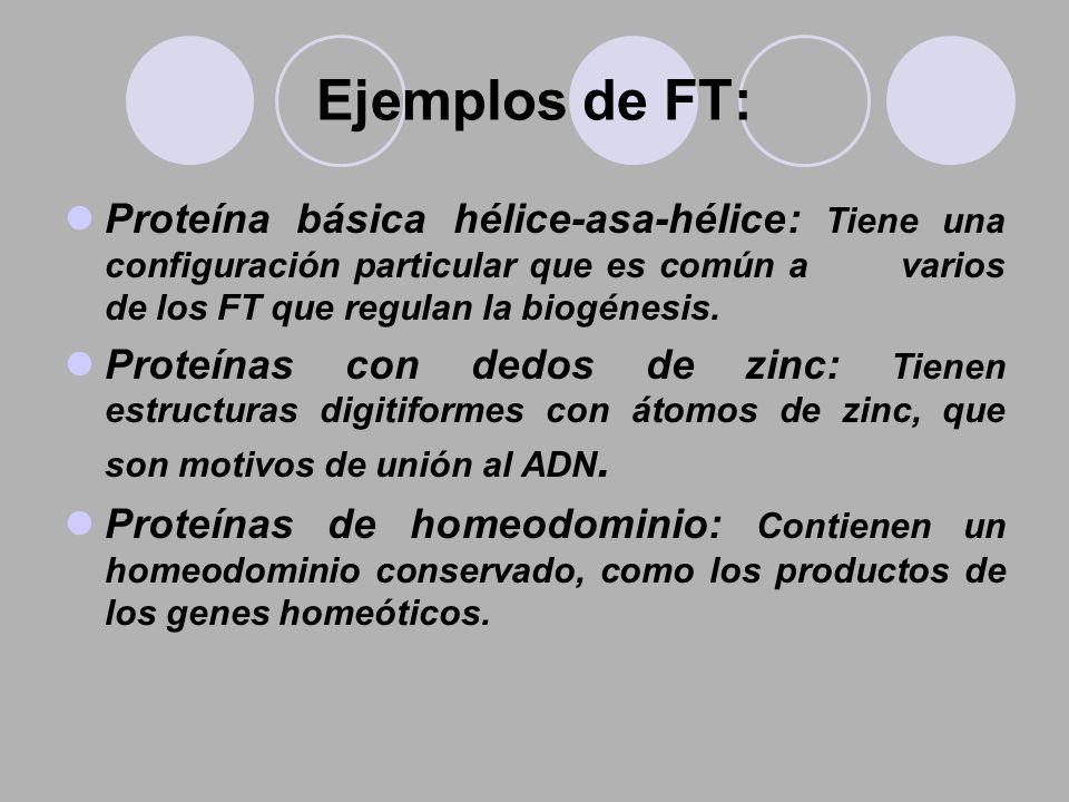 Ejemplos de FT: