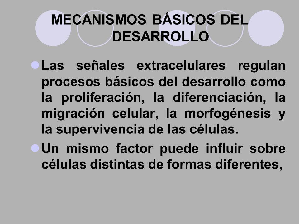 MECANISMOS BÁSICOS DEL DESARROLLO