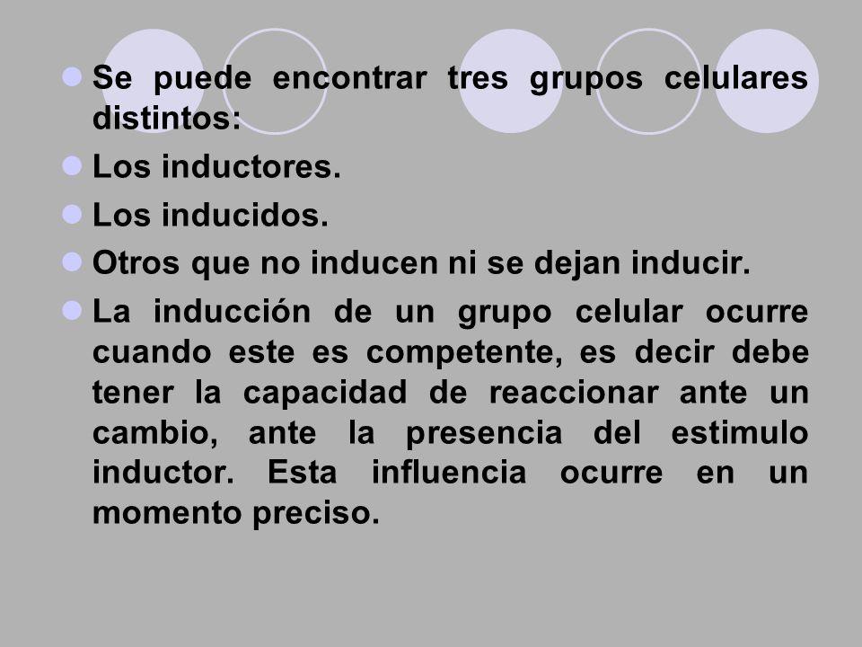 Se puede encontrar tres grupos celulares distintos: